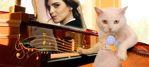 Put your photo on kitten`s piano score